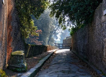 Tree lined street in ancient Pompeii