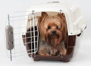 Put your pet in a pet carrier approved by your airline.