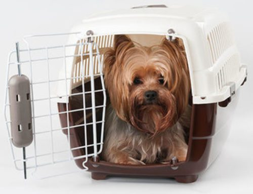 Tips for flying with pets onboard