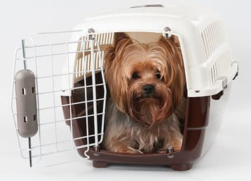 Flying with pets on airlines